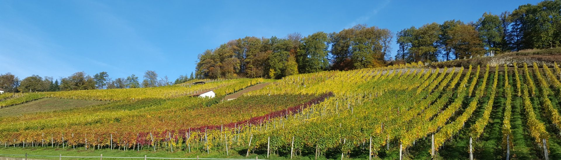 Swiss Wine Promotion